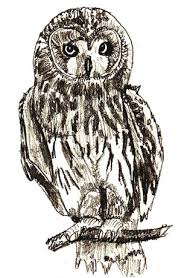 how to draw an owl draw step by step