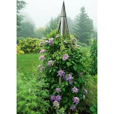 cedar tuteur white flower farm
