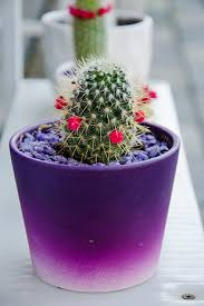 Backyard Gift Ideas 15 Diy How To Make Your Backyard Awesome Ideas 13 Cacti Gift