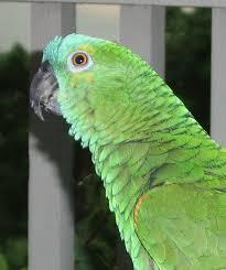 bird gifs find u0026 share on giphy