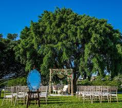 wedding backdrop brisbane 34 best wedding venues images on wedding venues