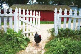 City Backyard The Fight For Raising Backyard Chickens In The City
