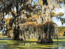 Alabama forest images Underwater forest off the coast of alabama jpg
