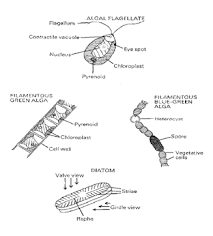 Diseases Caused By Protozoa In Plants - a review on recent diseases caused by microbes