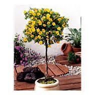 balkon und terrassenpflanzen balkon und terrassenpflanzen kaufen gartenxxl at