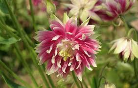 bbc gardening plant finder