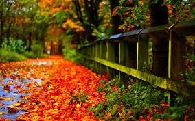 autumn pumpkin wallpaper widescreen nature wallpaper page 28 arorallc com autumn leaves
