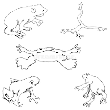 frogs sketch by hand pencil drawing by hand vector image the