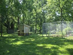 Deer Proof Fence For Vegetable Garden Gardening In The Wild Forest Three Blind Wives