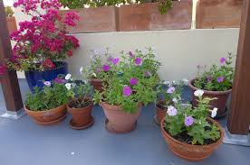 roof garden plants house and garden qui cherche trouve