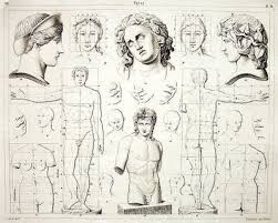 Human Figure Anatomy Figure Drawing Human Anatomy For Artists And Drawing Proportions