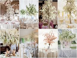 wedding trees blossom trees and wisteria trees for hire chillie