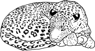 lying cheetah free coloring page adults animals coloring pages