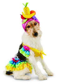 Cheap Dog Costumes Halloween 53 Funny Dog Halloween Costumes Cute Ideas Pet Costumes
