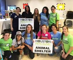help needed at houston pets alive houston volunteer opportunities