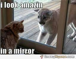 Puma Meme - fat cat puma meme avokazanji