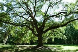 how far does an ortho tree sprayer spray home guides sf gate