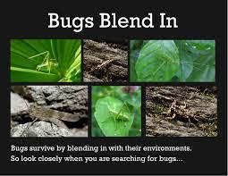 world of bugs backyard guide preview bula bug