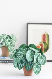 16 diy paper plants to make your indoor garden a reality brit co