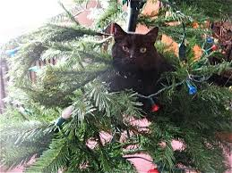 how to cat proof your christmas tree apartment therapy