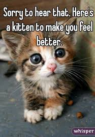 Feel Better Meme - feel better meme 100 images cute feel better meme feel best of