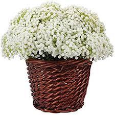 Baby Breath Flowers Amazon Com Duovlo Artificial Baby Breath Flower Gypsophila White