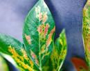 مكافحة امراض نباتات الزينة