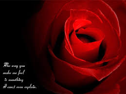 Flower And Love Quotes - rose images with love roses pinterest quote pictures and