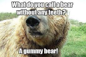 Funny Bear Meme - funny bear quotes meme image 08 quotesbae