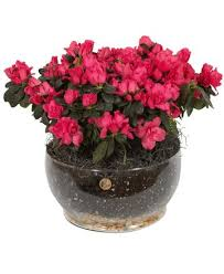 flowers and gifts home royer s flowers and gifts flowers plants and gifts with
