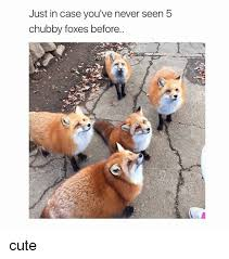 Chubby Meme - just in case you ve never seen b chubby foxes before cute meme