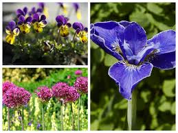 10 june flowering plants to add colour to your garden saga