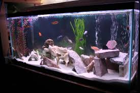 interior design view aquarium decoration themes small home