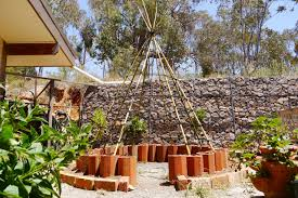 bean tipi seeds who wants some milkwood permaculture courses