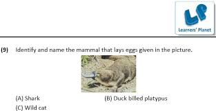 class 4 worksheets on science for animals u0026 their young ones