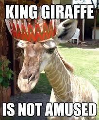 Giraffe Meme - 19 very funny giraffe images