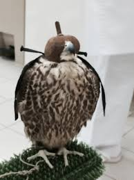 the abu dhabi falcon hospital
