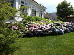 landscaping with hydrangeas ideas u2014 bistrodre porch and landscape