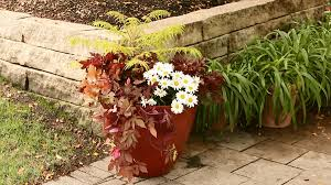 Flower Planter Ideas by A Gallery Of Beautiful Container Garden Ideas