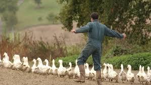 chambre d agriculture tarn et garonne grippe aviaire la chambre d agriculture du lot et garonne va