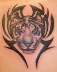 tribal tiger tattoos high quality photos and flash designs of