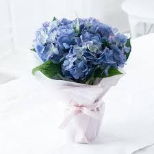 flower hydrangea hydrangeas hydrangea flower bouquets appleyard flowers
