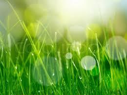 soft green soft blur green grass background stock photo colourbox