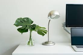 Plants Home Decor 7 Plant Décor Ideas In Scandinavian Interior Furnish Burnish