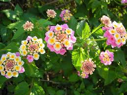 Flowers For Morning Sun - 10 best flowers to use in hanging baskets