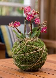 kokedama string gardening kokedama kit japanese moss balls