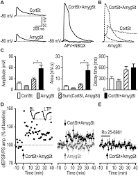 alcohol induces input specific aberrant synaptic plasticity in the