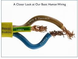 we are so basic the wiring that makes us human u2014 sara saltee