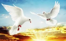 white doves in flight sunset orange clouds wallpaper widescreen hd