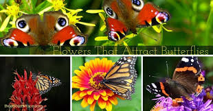 what kind of flowers do butterflies like and how to design a
